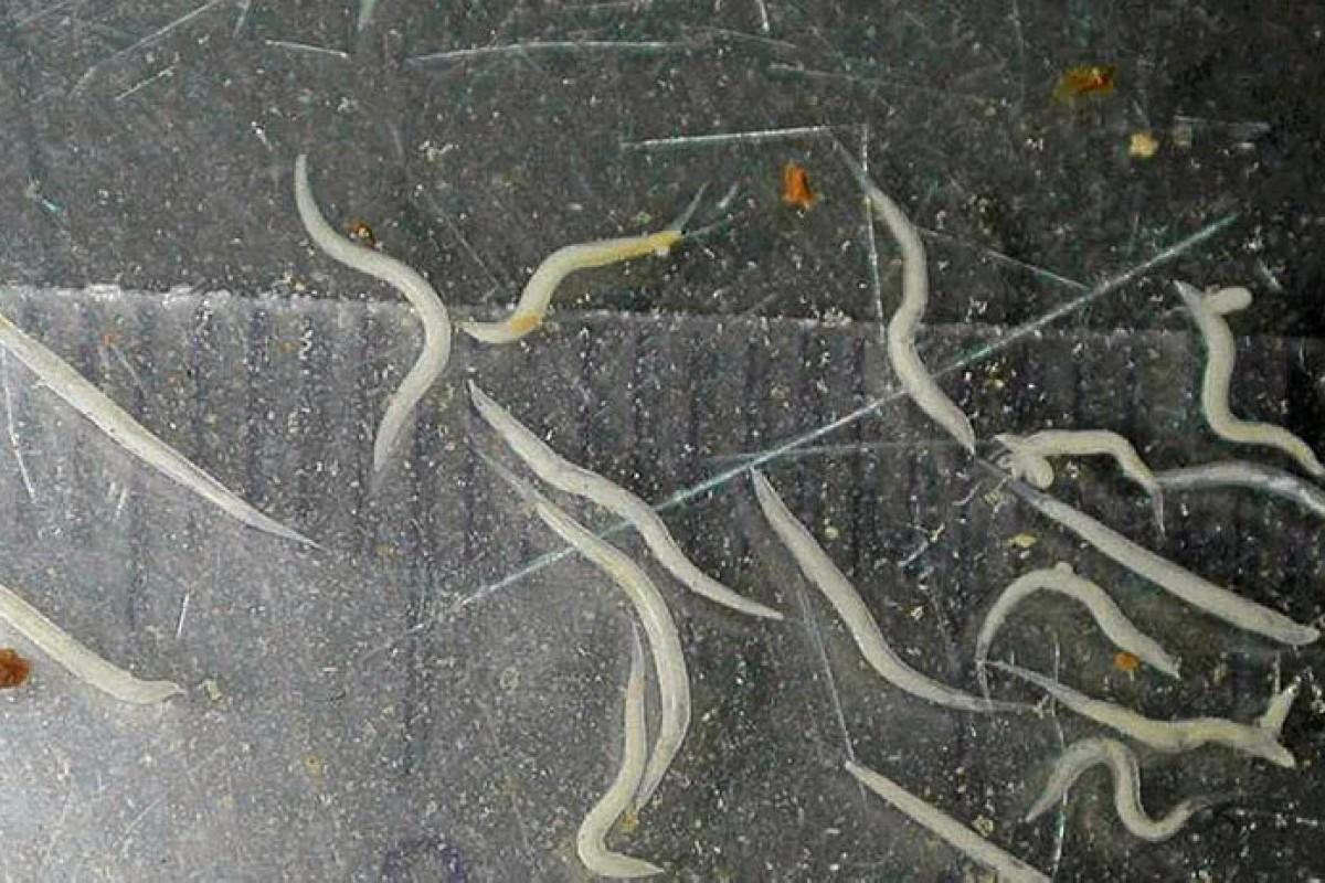 Parasiten Im Darm Verstehen Erkennen Loswerden